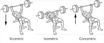 eccentric isometric concentric - CSCS Study Questions